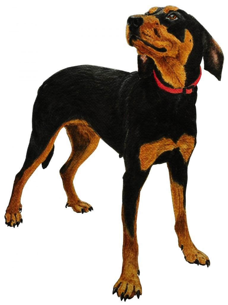 addestramento cani da tartufo perugia italy - photo#44