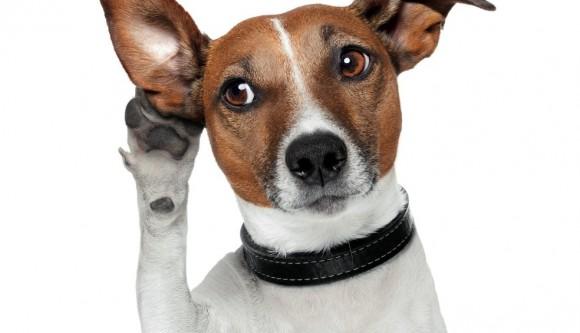 addestramento cani da tartufo perugia italy - photo#48