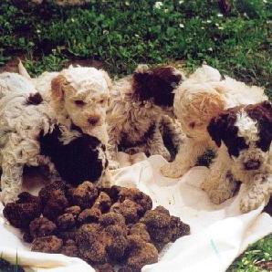 Negozio for Articoli per cani