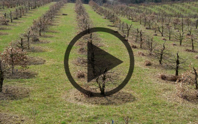 Video sulla Tartuficoltura