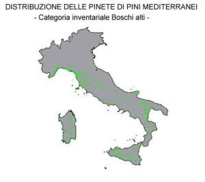 pinete_di_pini_mediterranei
