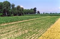 agronomiche