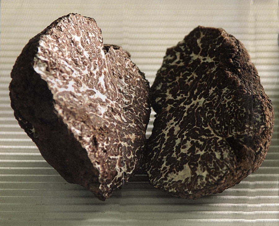 tartufo nero ordinario