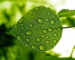 L'app che riconosce le piante