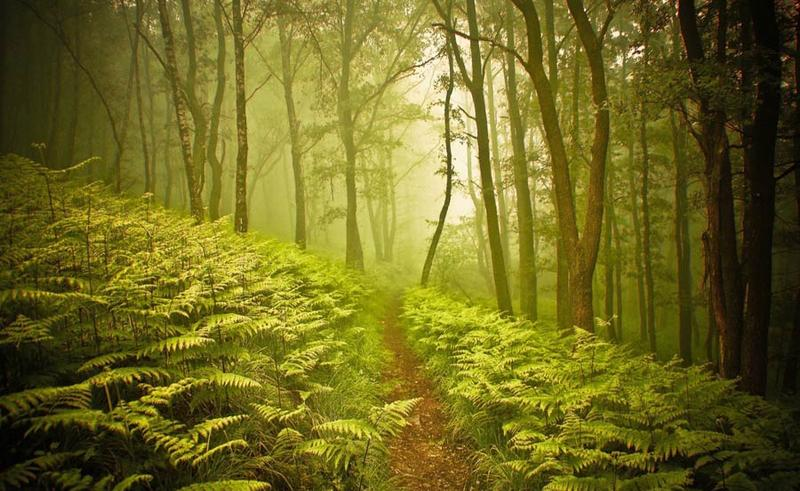 Quiz interattivo sugli alberi simbionti