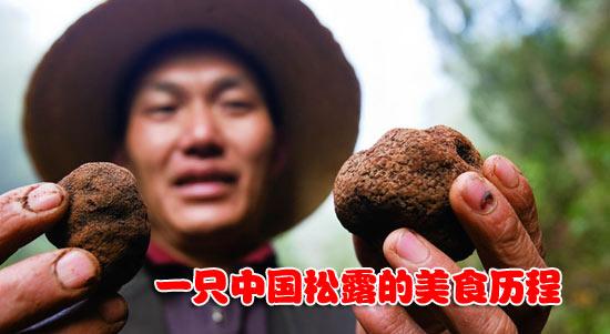 Legalizzare il Tartufo Cinese