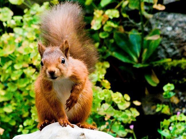 scoiattoli da tartufo