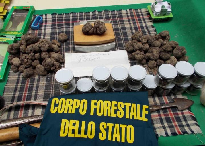 Urbino 8 kg di scorzone sequestrati