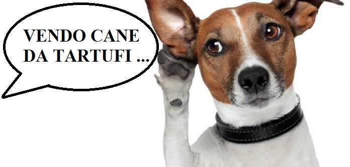 Come ti vendo il cane da tartufi
