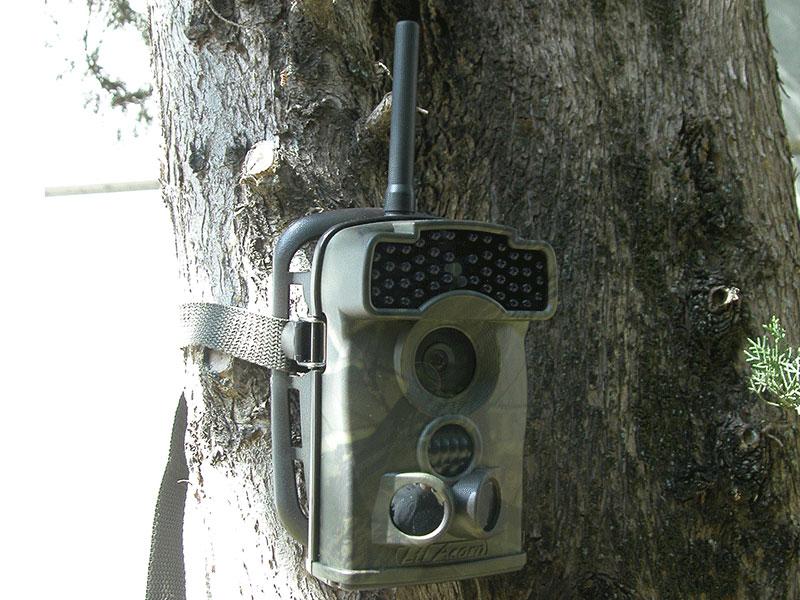foto-trappole