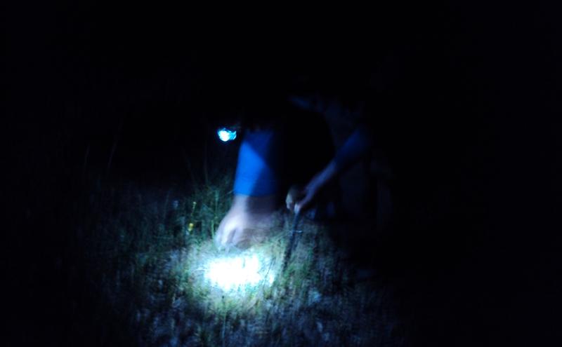 Cercano tartufi di notte