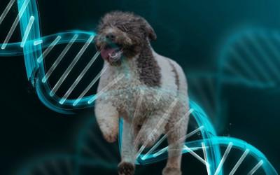 test genetici