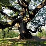 alberi simbionti