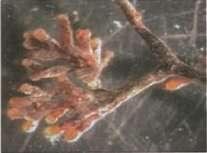 micorrize