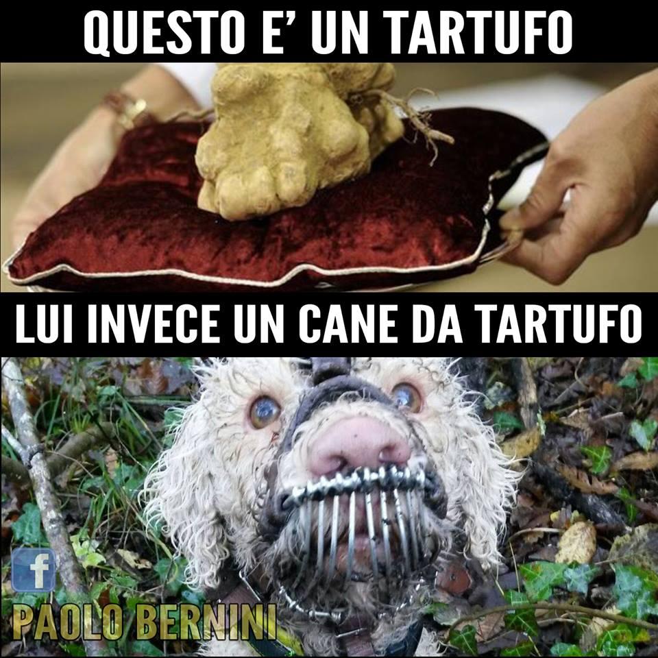 Paolo Bernini