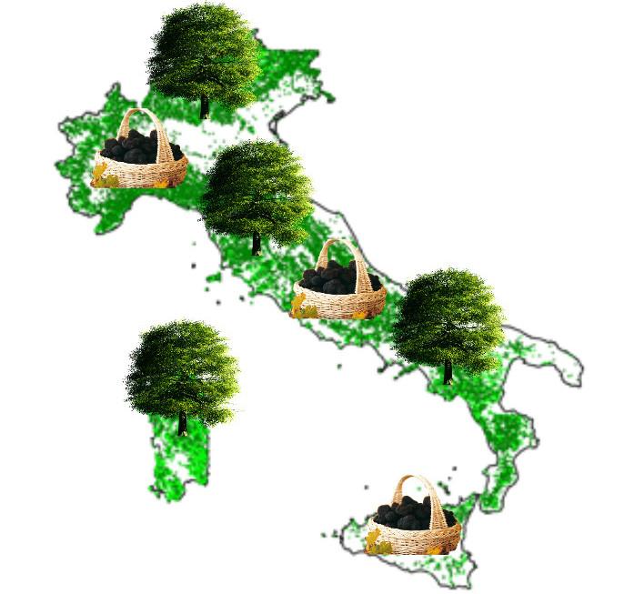 Mappe dei boschi Italiani