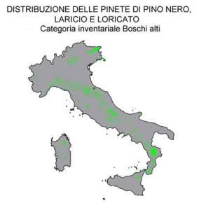 pino-nero-laricio-loricato