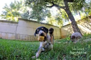 foto-di-fabio-zaccardi-cucciolo-con-tartufo-bianco