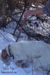 foto-di-fabrizio-palmi-cane-da-tartufi-nella-neve