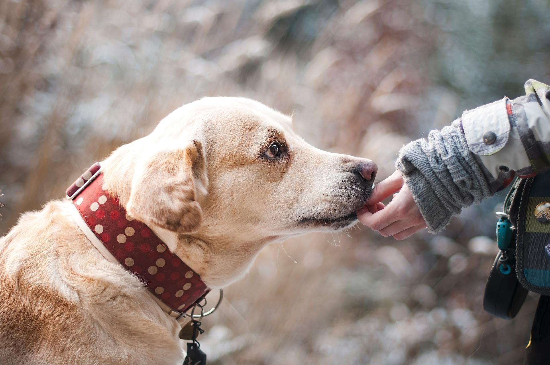 assicurare il cane da tartufi