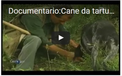 video documentari sui tartufi
