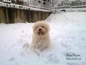 foto-di-michael-mazzone-cna-da-tartufi-in-mezzo-alla-neve