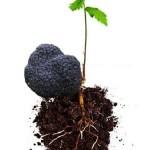 pianta-micorizzata-uncinato