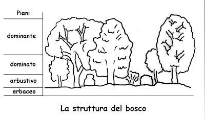 la struttura del bosco