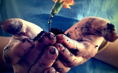 fiori-del-sottobosco-indicatori-di-terreni-tartufigeni
