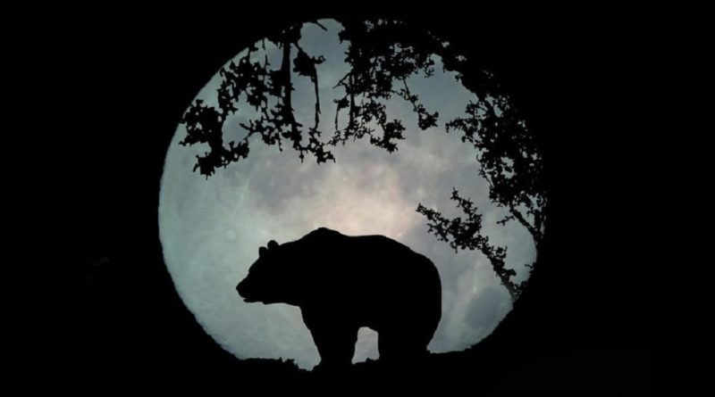 L'orso e il tartufo
