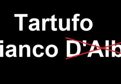 """Tartufo d'Alba  al tramonto?«È un errore definire """"d'Alba"""" tutti i tartufi»"""