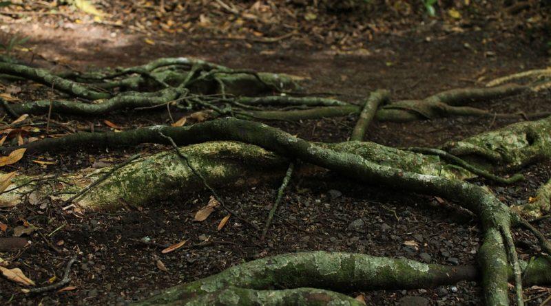 Gli alberi comunicano tra loro grazie ai tartufi