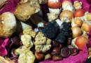 Micofobia:  paura dei funghi
