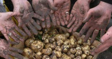 La Bonnotte : la patata che vale quanto i tartufi