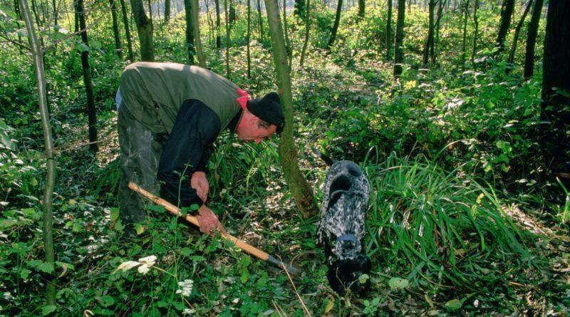 Terre del Reno: Tartufaio 69ennne gravemente ferito durante la cerca
